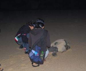 Turtle_LeavingBeachNightPatrol